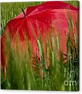 Red Umbrella On The Wheat Field Canvas Print