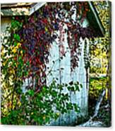Red Vine Shed Canvas Print