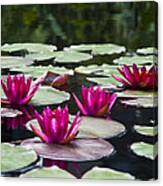 Red Water Lillies Canvas Print