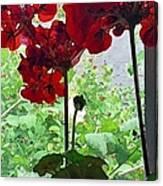 Red Window Geraniums Canvas Print