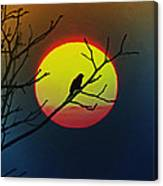 Red Winged Blackbird In The Sun Canvas Print