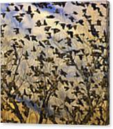 Red-winged Blackbirds At Sunset Canvas Print