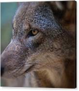Red Wolf Stare Canvas Print