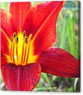 Red Yellow Lily Canvas Print
