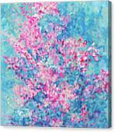 Redbud Special Canvas Print
