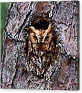 Reddish Screech Owl Canvas Print
