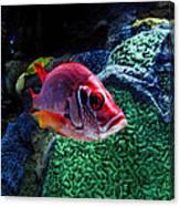 Redfish Canvas Print