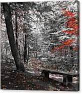 Reds In The Woods Canvas Print