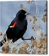 Redwing Blackbird Canvas Print