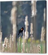 Redwinged Blackbird Canvas Print