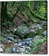 Redwood Creek Art Canvas Print