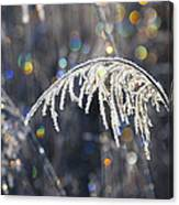 Reed With Frost And And Color Canvas Print