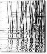 Reeds On The Turtle Flambeau Flowage Canvas Print
