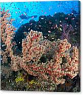 Reef Scene With Sea Fan, Papua New Canvas Print
