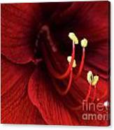 Ref Lily Canvas Print