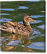 Reflected Duck Canvas Print