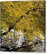 Reflecting Autumn Tree Canvas Print