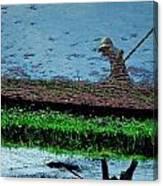 Reflecting On Rice Canvas Print