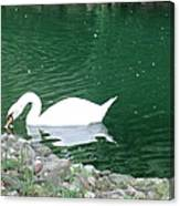Reflection Of A Swan Canvas Print