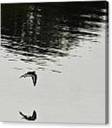 Reflection Of Flight Canvas Print