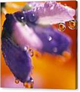 Reflection Of Flower In Dew Drops Canvas Print