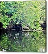 Reflection On The North Fork River Canvas Print