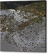 Reflections Of A Lacy Leaf Canvas Print