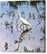 Reflections Of A White Bird Canvas Print