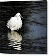 Reflections Of An Egret  Canvas Print