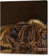 Reflexion D'un Hornet  Canvas Print