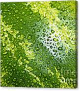 Refreshing Watermelon Canvas Print