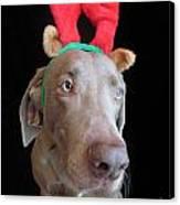 Reindeer Doggie Canvas Print