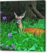 Relaxing In The Morning Canvas Print