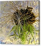 Releasing Seeds Canvas Print