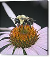 Resting Bee Squared Canvas Print