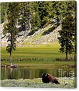 Resting Buffalo By Pond Canvas Print