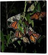 Resting Monarchs Canvas Print