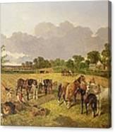 Resting Plough Team Canvas Print