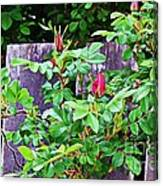 Resting Rosebuds Enhanced Canvas Print