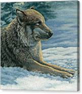 Resting Wolf Canvas Print