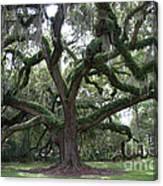 Resurrection Oak Canvas Print
