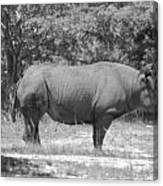 Rhino In Black And White Canvas Print