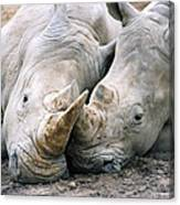 Rhino Love Canvas Print
