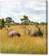 Rhino Pair Canvas Print