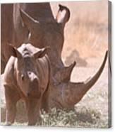 Rhinoceros With Calf Canvas Print
