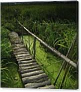 Rice Bridge Canvas Print
