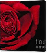 Rich Red Rose Canvas Print