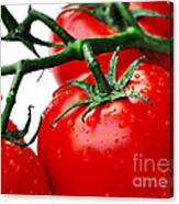Rich Red Tomatoes Canvas Print