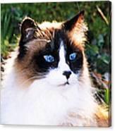 Rikki Blue Eyes Canvas Print