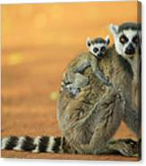 Ring-tailed Lemur Mother And Baby Canvas Print